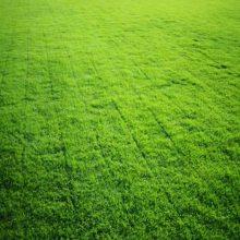 凯里马尼拉草皮绿化基地 凯里绿化草皮价格批发 凯里马尼拉草卷