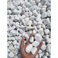 辽宁纯白鹅卵石生产 3-5公分白鹅卵石价格