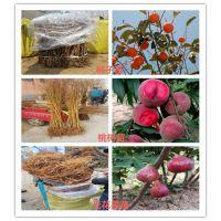 1年火龙果苗价格是多少、火龙果苗品种介绍