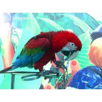 百鸟展资源供应鹦鹉表演节目创新百鸟互动