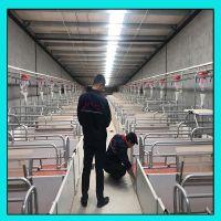 料线配件母猪产床 现代化养殖机械母猪分娩产床配件母猪产床