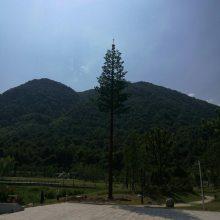 衡水优旺仿生树价格仿生树发射塔