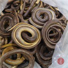 野生脆蛇的功效 脆蛇多少钱一斤