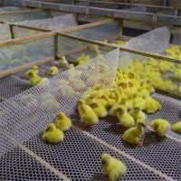 养鸡塑料脚踩网 养鸭塑料脚踩网 养殖网