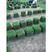 江西公园马尼拉草皮 江西赣州基地在哪里批发 江西绿化草皮价格