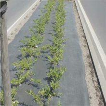 甘肃2米宽防草布 果园覆盖保湿