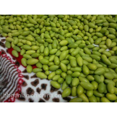 供应橄榄批发