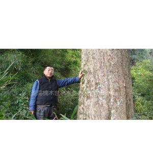 湖南楠木世家供应各种金丝楠木板材 特价供应