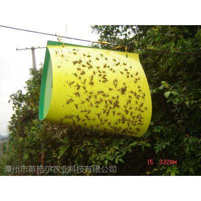 果实蝇性诱剂诱捕器诱多多针蜂粘板英格尔桔小实蝇诱虫板果蝇瓜实蝇诱剂实蝇粘胶板