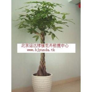 供应办公室绿植办公室花卉租赁