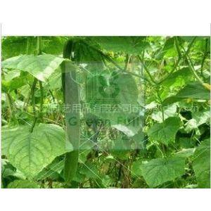 供应纺织之乡湖塘桥牌爬藤网,植物支架网,黄瓜网