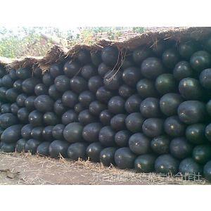 供应5000万斤冬瓜批发冬瓜出售东台冬瓜-东台绿农蔬菜合作社