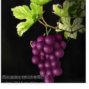 厂家供应 葡萄籽提取物(原花青素)