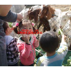供应上海农家乐一日游 钓鱼 赏桃花 采草莓