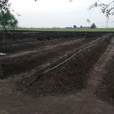 河北鸡粪厂家出售 晾晒干鸡粪 自然风干鸡大便 果树专用肥料