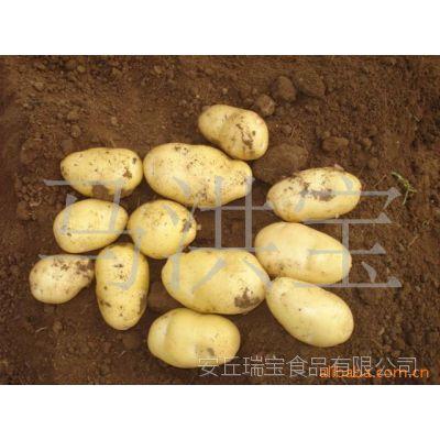 出口级荷兰土豆 饱满大个 有机蔬菜 安丘农产品 低价批发马铃薯