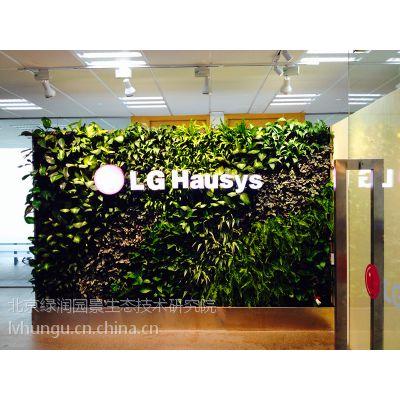 植物墙哪里好北京绿魂谷生态园艺办公室绿植墙公司前台绿植墙