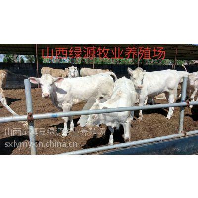 山西肉牛 江西肉牛养殖场 山西小牛
