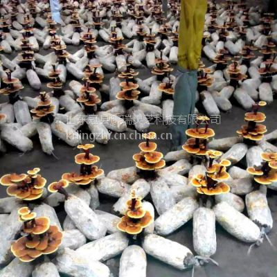 广西省玉林市长白山灵芝孢子粉价格行情康瑞灵芝
