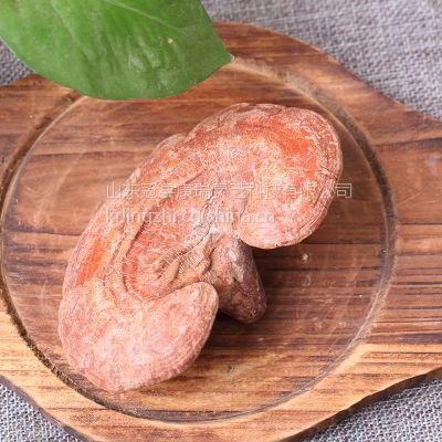 山东新鲜灵芝食用方法 赤芝厂家康瑞灵芝