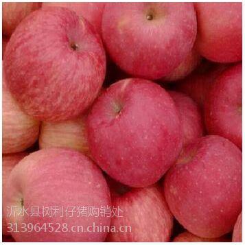 红富士苹果产地批发 冷库果75上不封顶