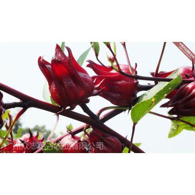 红桃K果 ,供客户及游人自行采摘选购,不批发
