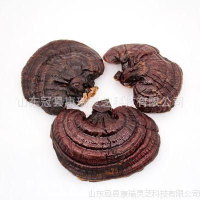 优质山东灵芝 散装大量批发中药材 供应今年新货 紫灵芝 源产地直