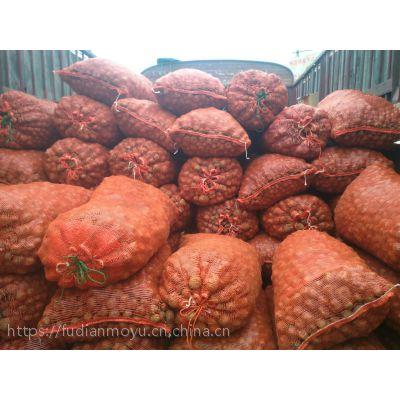 石林县魔芋种植基地、石林县魔芋种子、石林县魔芋种子多少钱一斤、石林县魔芋种子销售、石林县魔芋种子价格
