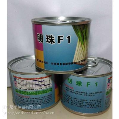 日本进口F1大葱种子【明珠F1 】【耐热、耐寒、耐涝】