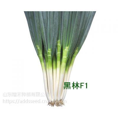 【黑の林F1 Heilin F1】【耐热性、耐寒性强,品质好、产量高】