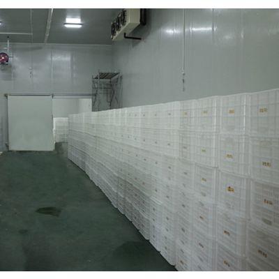 合肥果蔬保鲜冷库设计安装哪家公司好