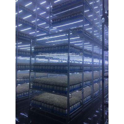 食用菌灯带,合诚兴光电食用菌专用LED补光灯,LED蘑菇灯,蘑菇工厂,