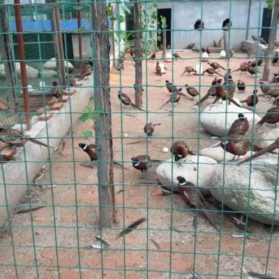 养鸡围栏网A养鸡围栏网生产厂家A绿色卷网6*6山地养土鸡围栏