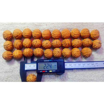 粒径20-45mm美国猴头核桃2万粒清仓甩卖