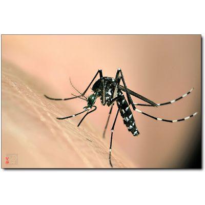 成都专业灭蚊子服务公司
