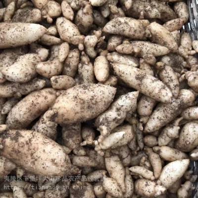 供应乌红杂交一代天麻种子,配套蜜环菌和种植技术,天麻种子销售价格
