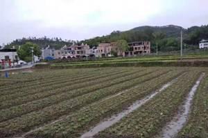 河南产量高的全自动花生播种机信赖推荐 诚信为本 河源市李旭农业机械设备供应