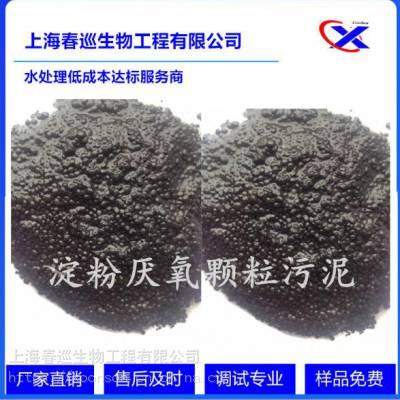 淀粉厌氧颗粒污泥价格,淀粉厌氧颗粒污泥颗粒度,淀粉颗粒污泥价格,淀粉厌氧污泥,春巡生物