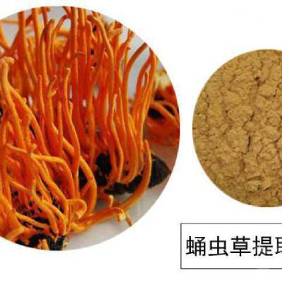 冬虫夏草提取物 蛹虫草粉 虫草多糖10% 1kg起订 欢迎采购