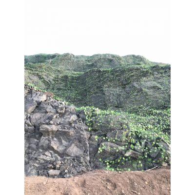 承德山体喷浆防护网 复绿护坡挂网厂家 客土喷播边坡绿化防护网