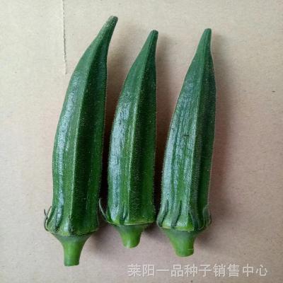 一品耐热秋葵种子_日本进口水果秋葵种子_新品种秋葵种子现货