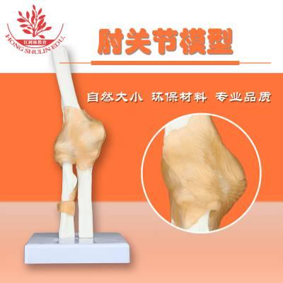 精品爆款自然大肘关节模型人体骨骼肘关节模型带韧带有底座