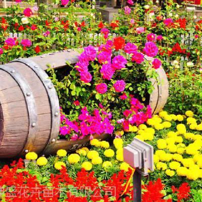 山东花坛设计,广场花卉批发,花坛绿化花卉哪里有
