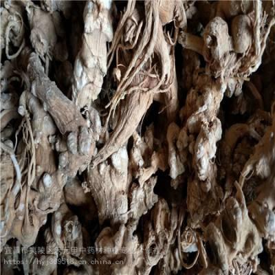 广元利州野三七栽培方法 竹节参农业致富项目 竹节参种植技术
