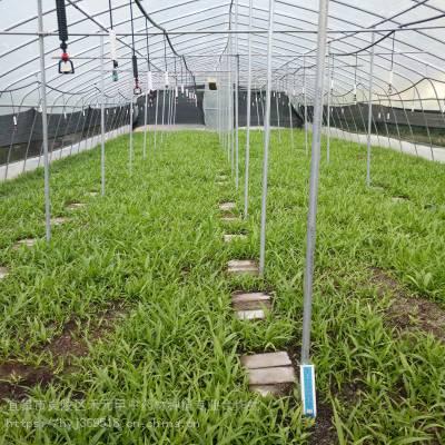 贵州毕节禾元甲竹节参野三七种植什么项目赚钱