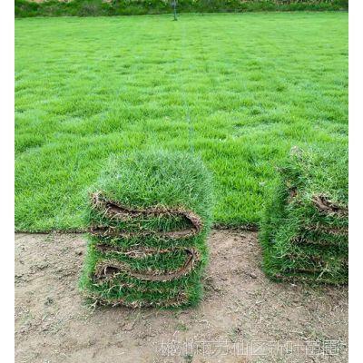 怀化马尼拉草坪真草皮出售价格