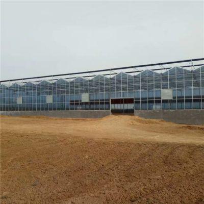 甘肃文洛式玻璃温室大棚建设厂家在哪里