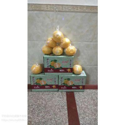 甜葡萄柚苗基地价格__哪里有卖甜葡萄柚苗
