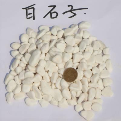 大港白色小石头 园林绿化白石子 白色鹅卵石