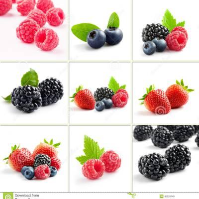 酸果莓提取物 蔓越莓提取物10:1 1公斤起订